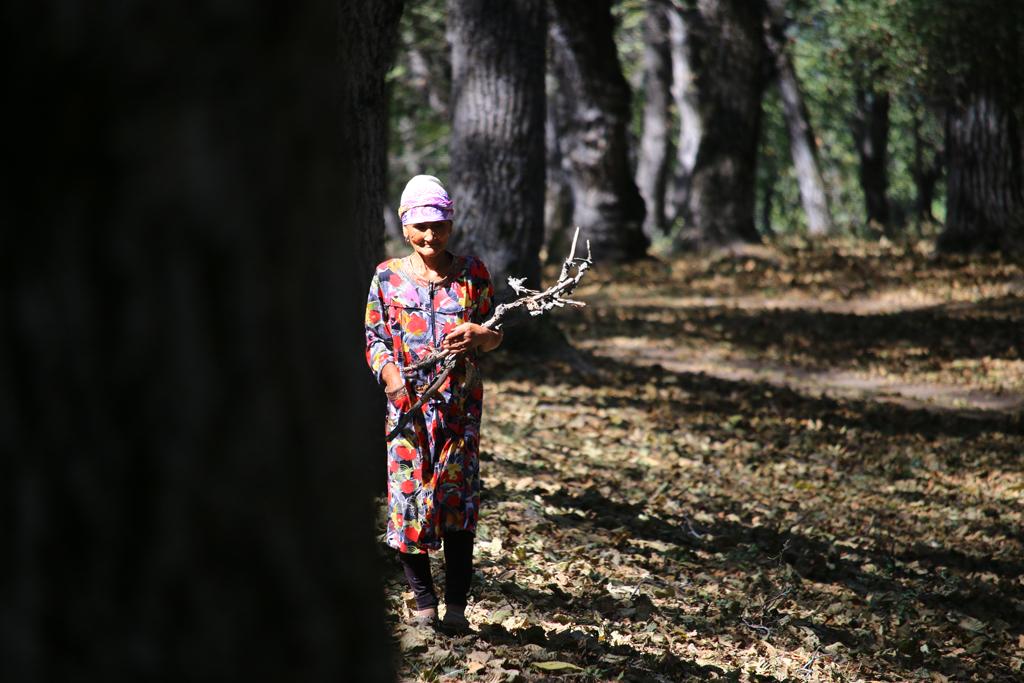 Einheimische bei der Suche nach Feuerholz