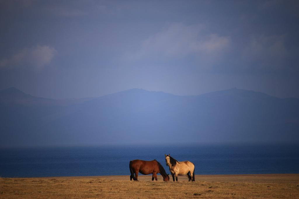 Wildpferde am Song Kul