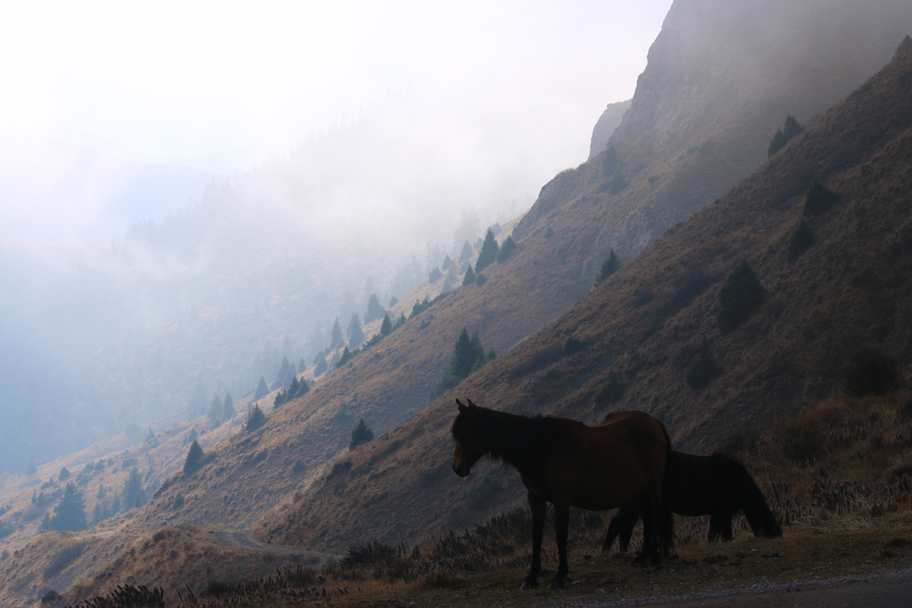 Die Fahrt ins Tal