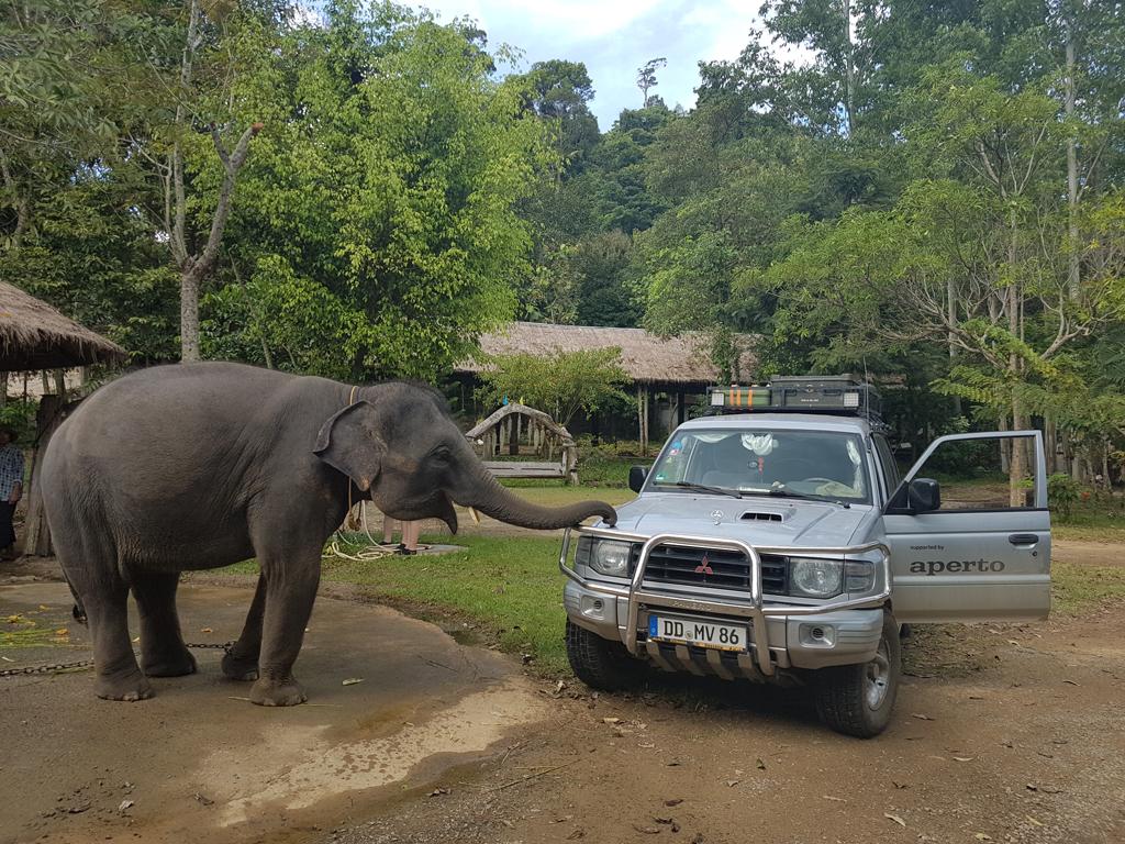Der Elefant mag anscheinend mein Auto