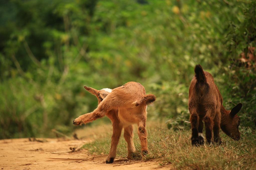 Tiere auf den Straßen