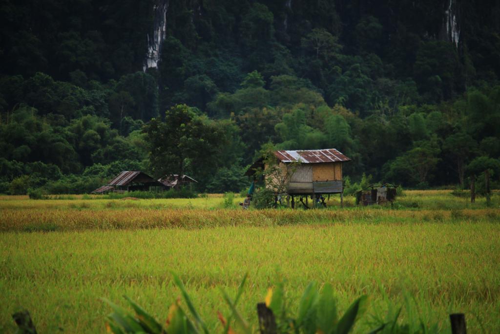 Reisfelder in der Region