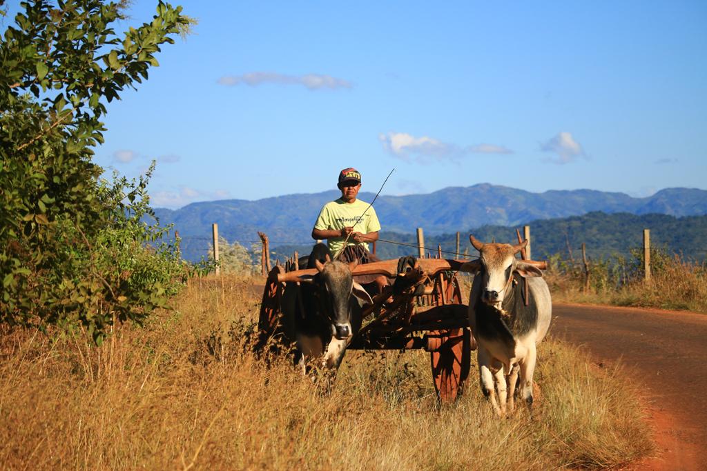 Ochsenkarren - Weit verbreitet auf dem Land