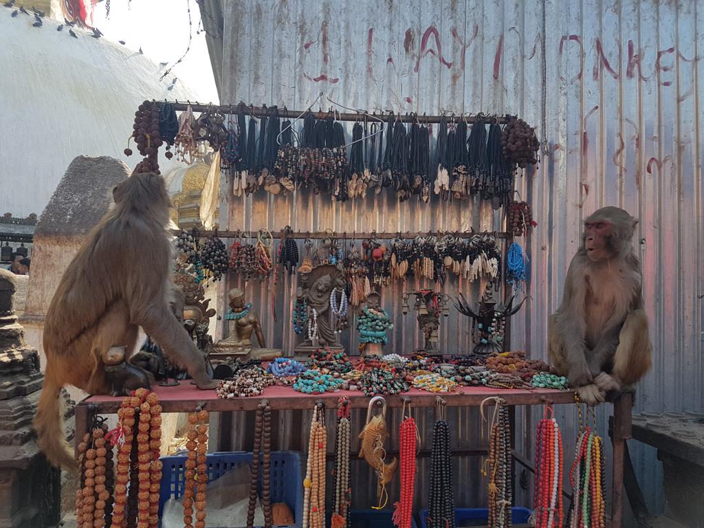 Die Affen übernehmen gerne mal die Macht