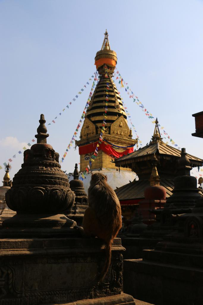Von der Stupa haben nicht nur die Affen eine gute Sicht