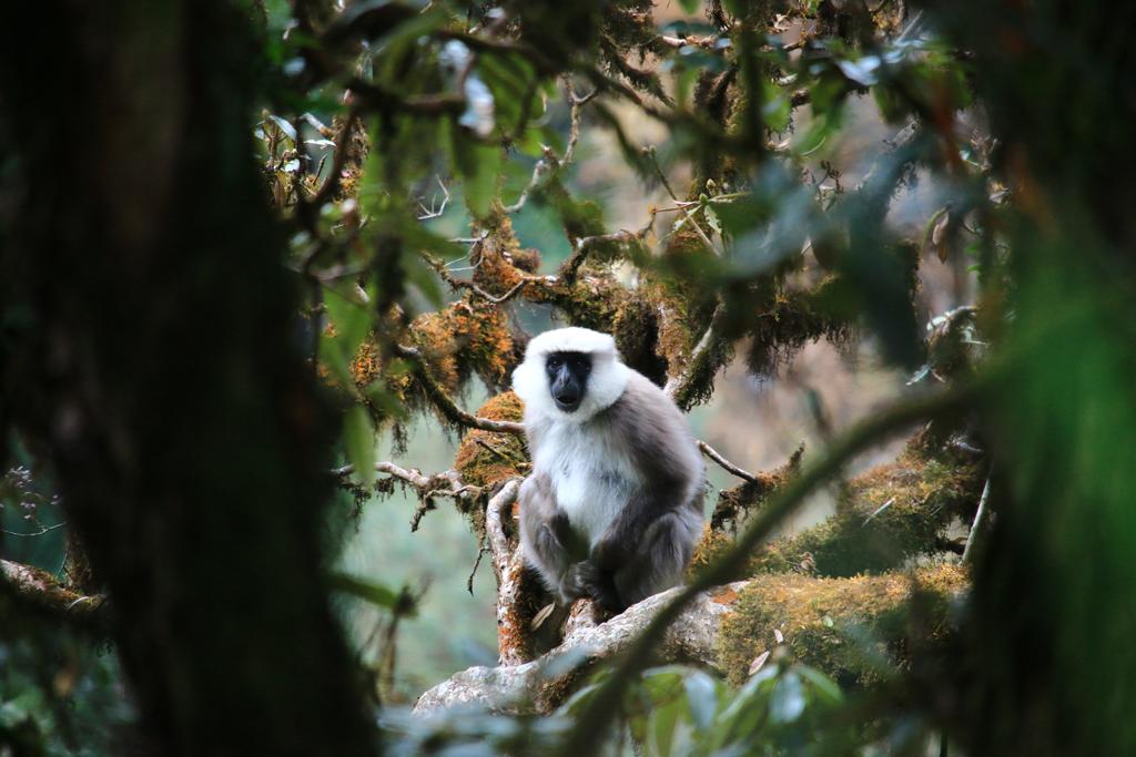 Zweite Etappe: Ghandruk - Ghorepani (16KM) Hier gabs sogar Affen zu sehen!