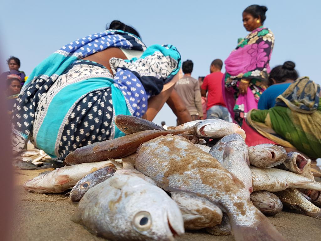 An der Ostküste reiht sich ein Fischerdorf an das nächste. Fischerei ist Haupteinahmequelle.
