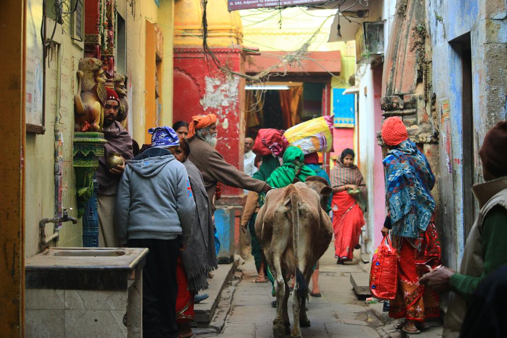 Typisches Bild in den Gassen: Eine heilige Kuh sucht sich ihren Weg