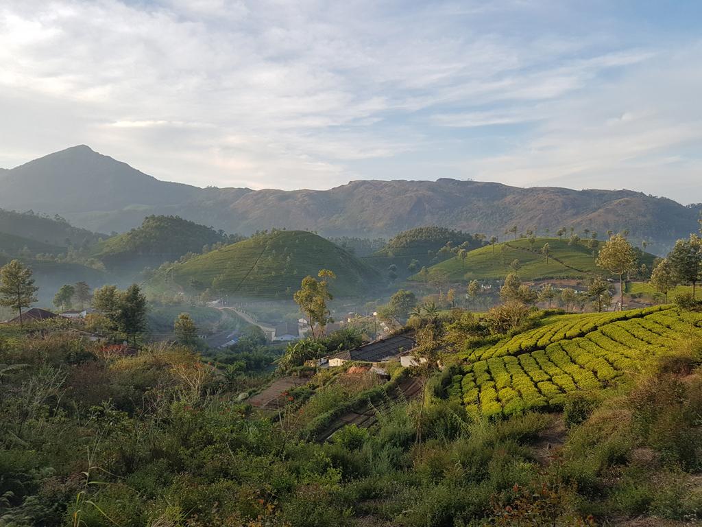 Teefelder von Munnar