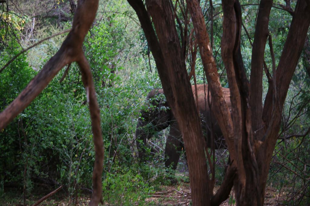 Wilder Elefant neben der Straße im Chinar Wildlife Sactuary